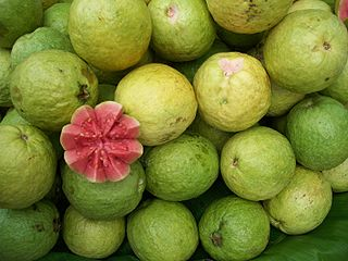 320px-Guava_bangalore